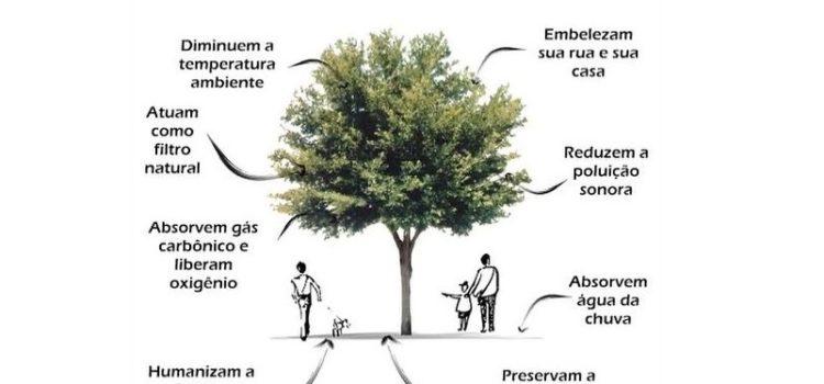 Datas Comemorativas: Dia da Árvore